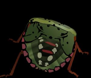 Stink Bug  PNG images