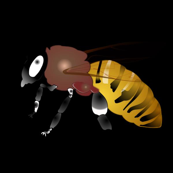Hornet PNG Clip art