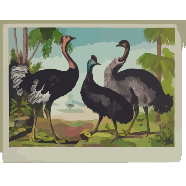 The Ostrich PNG images