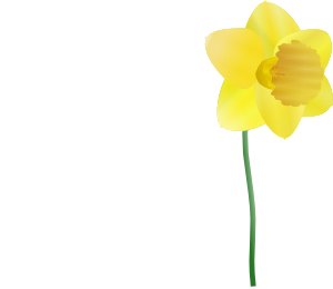 Daffodil  PNG images