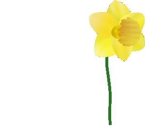 Daffodil  PNG Clip art
