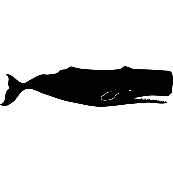 Spermwhale PNG Clip art