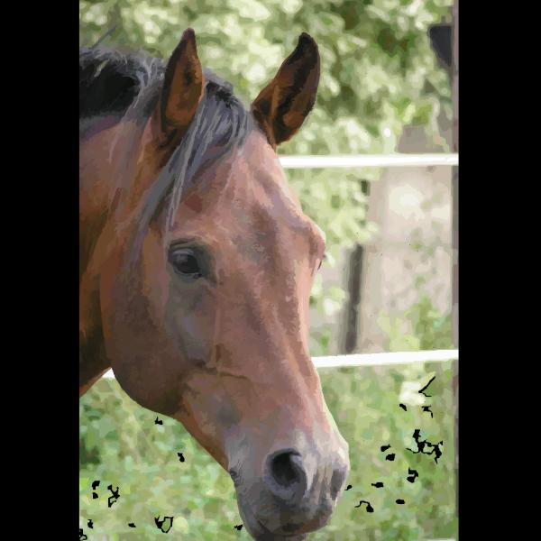 Horse Profile PNG Clip art