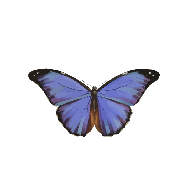 Blue Butterfly PNG Clip art