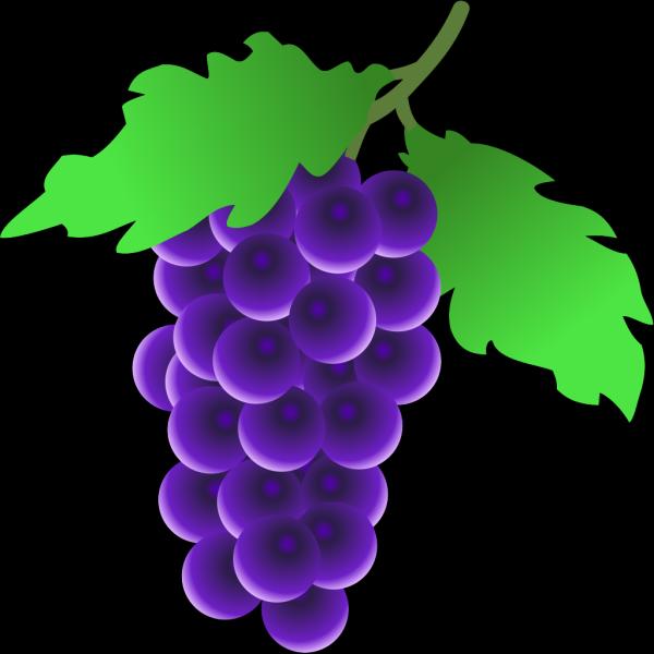 Grapes Vine PNG Clip art