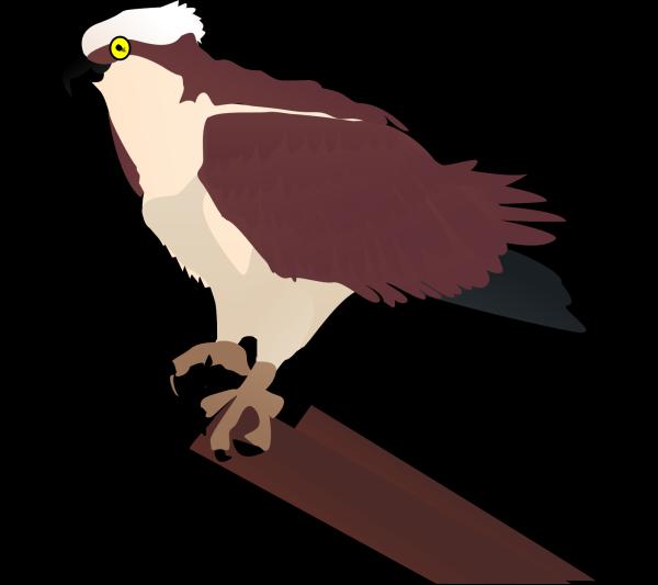 Hawk PNG Clip art