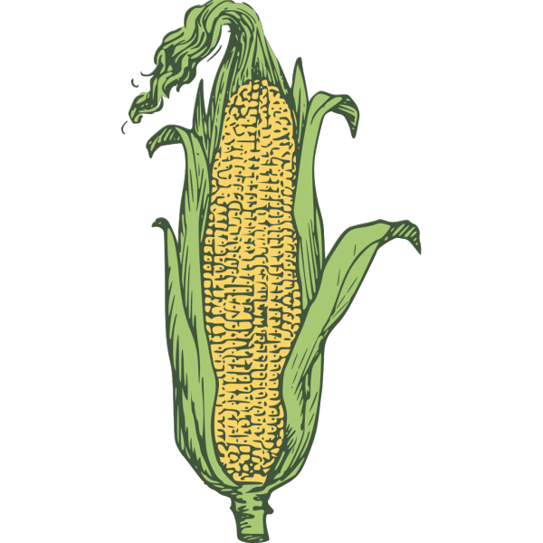 Clip Arts Related To - Corn Clipart Free - Png Download - Full Size Clipart  (#38533) - PinClipart