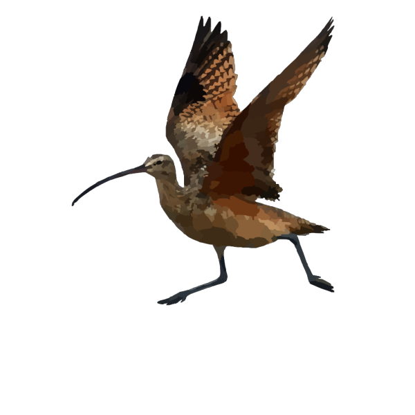 Long Billed Curlew PNG Clip art