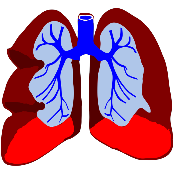 Lungs PNG icons