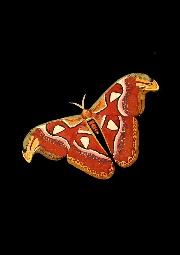 Mariposa Azul PNG Clip art