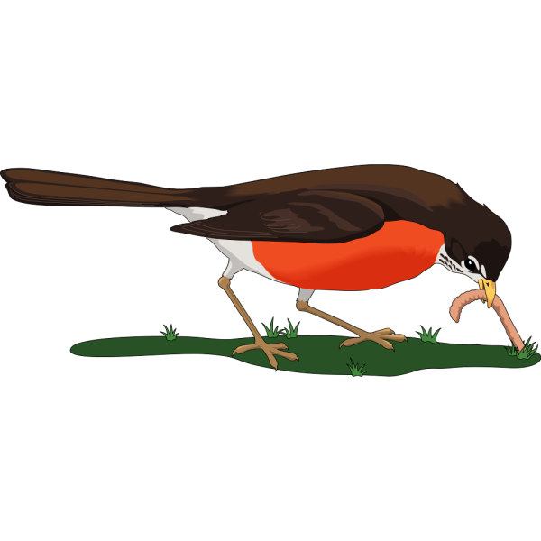 Bird Eating Worm PNG images