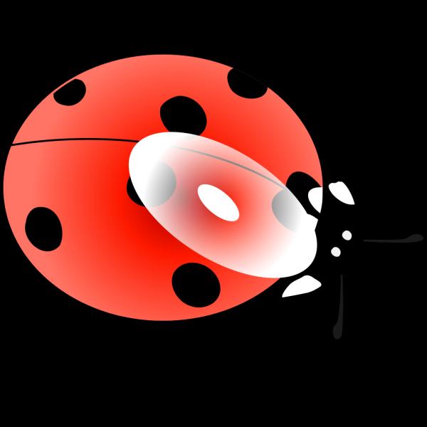 Light Blue Ladybug PNG Clip art