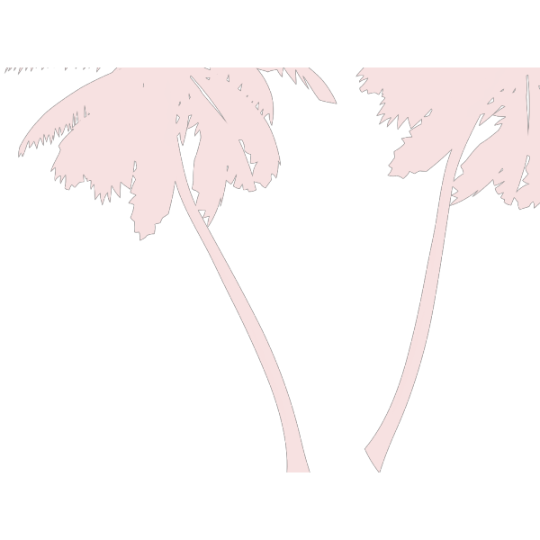 Vector Palm Trees PNG Clip art