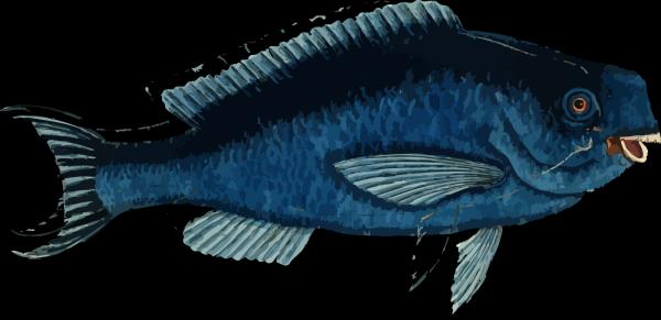 Blue Sad Fish PNG Clip art
