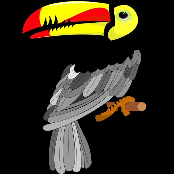 Toucan PNG Clip art