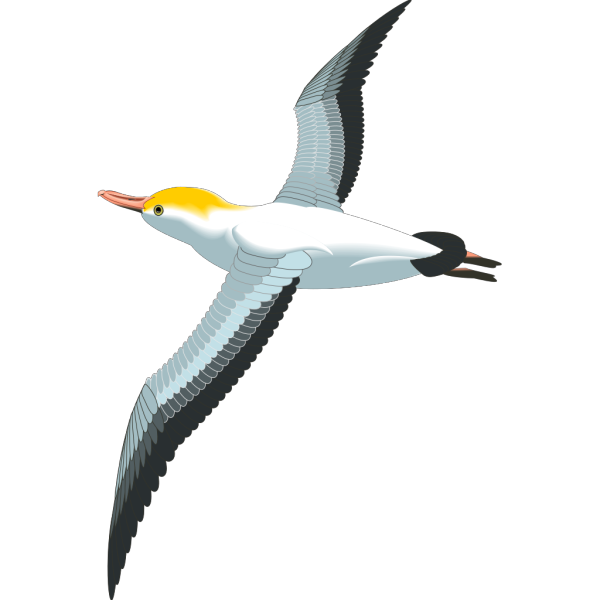 Flying Sea Gull PNG images