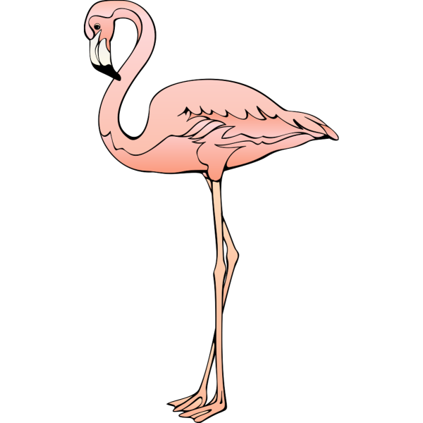 Flamingo 3 PNG images