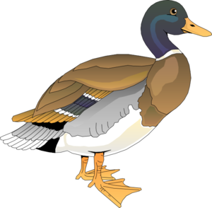 Walking Duck 2 PNG Clip art