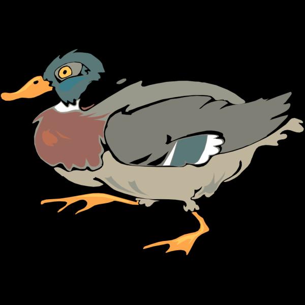 Walking Duck PNG Clip art