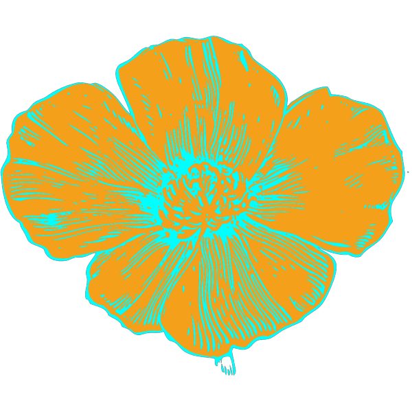 Orange And Blue Poppy PNG images