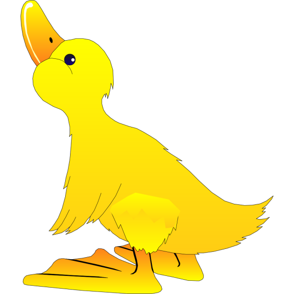 Young Duck PNG images
