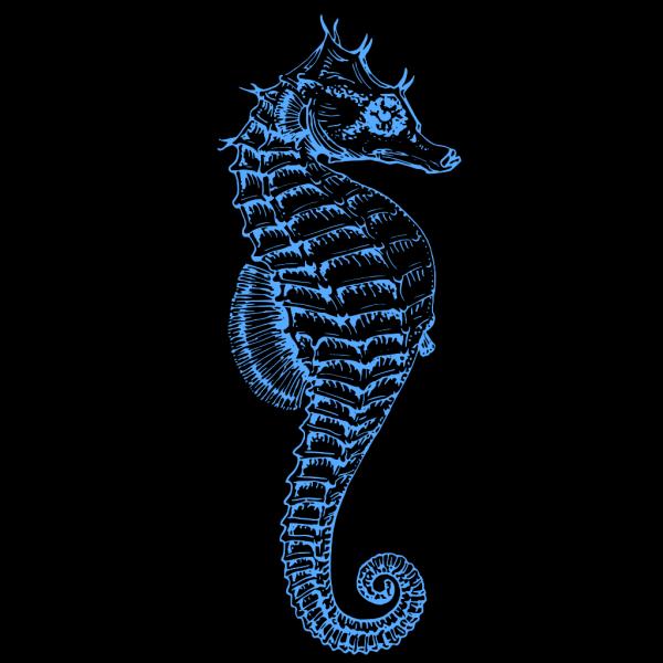 Blue Seahorse PNG Clip art