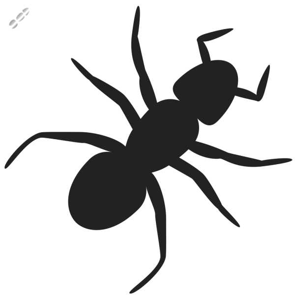 Ant PNG images