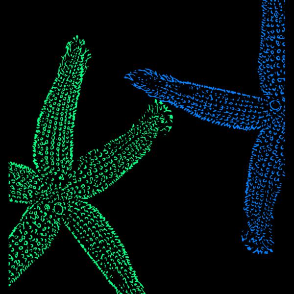 Blue Green Starfish2345555 PNG Clip art