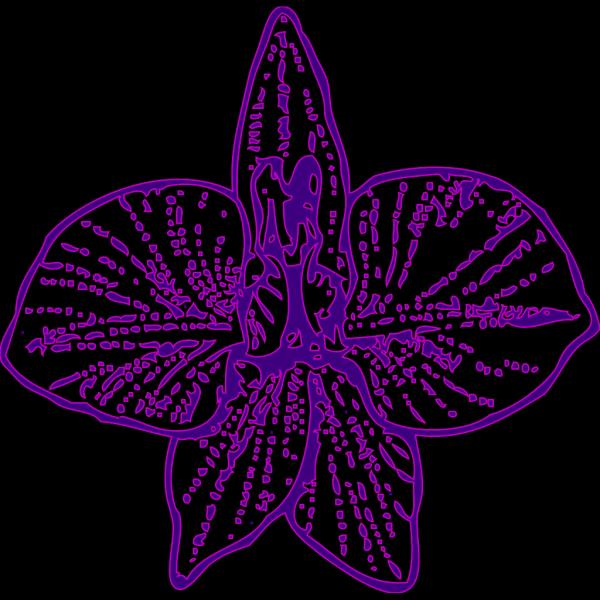 Blue Orchid Outline PNG Clip art