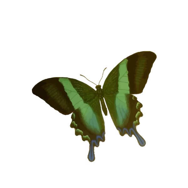 Blue And Green Butterfly PNG Clip art