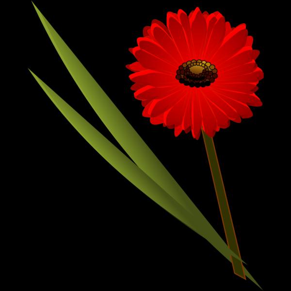 Red Gerbera Daisy PNG Clip art