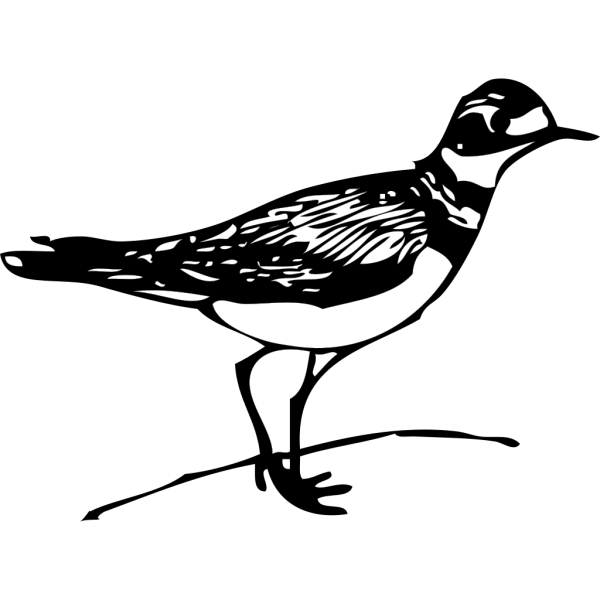 Killdeer PNG Clip art