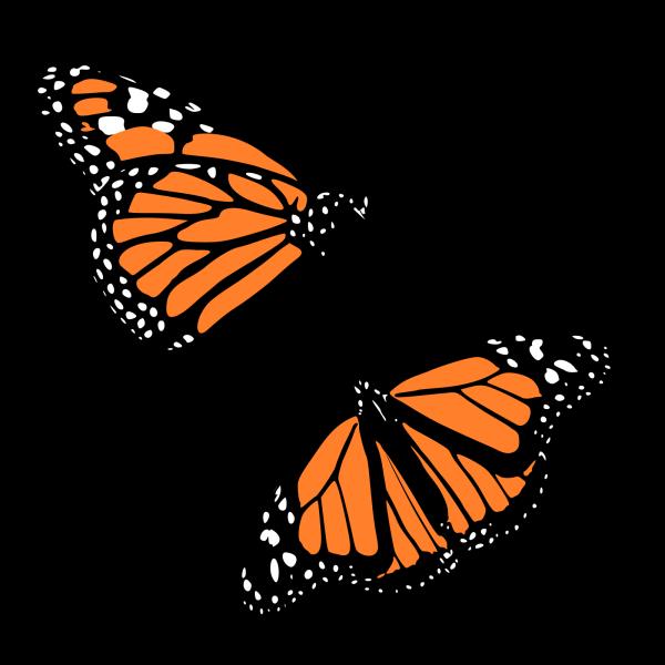 Butterflies PNG Clip art