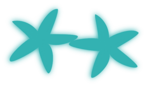 Aqua Starfish Duo PNG Clip art