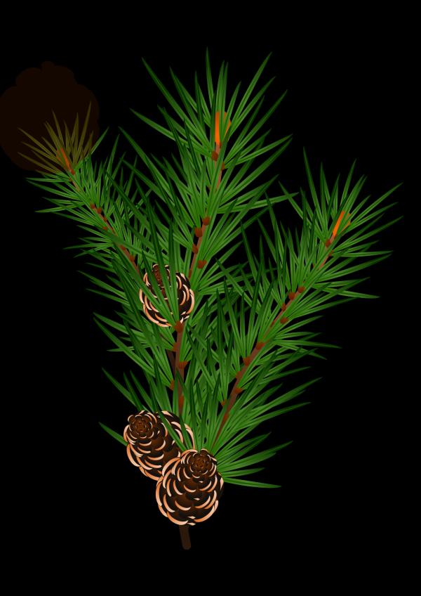 Branch PNG Clip art