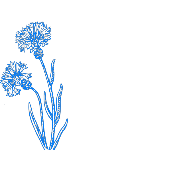 Blue Cornflower Sketch PNG Clip art
