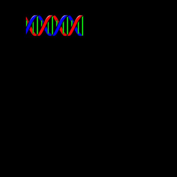 Double Helix PNG Clip art