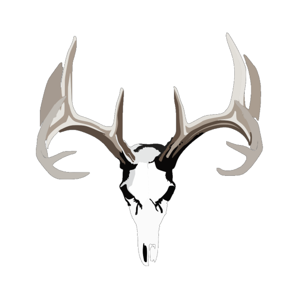 Antlers PNG Clip art