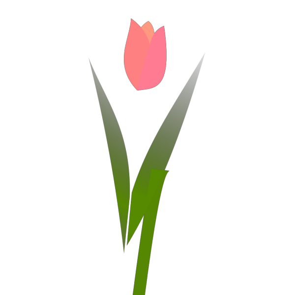 Blue Tulip PNG images