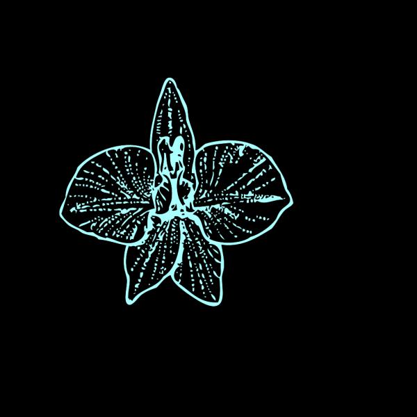 Blue Orchid   Clip Art PNG images