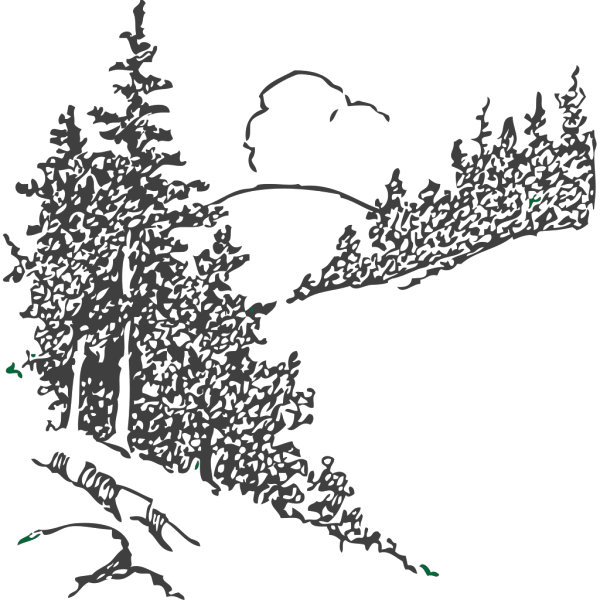 Pine Trees PNG Clip art