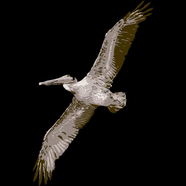 Pelican Bird PNG Clip art
