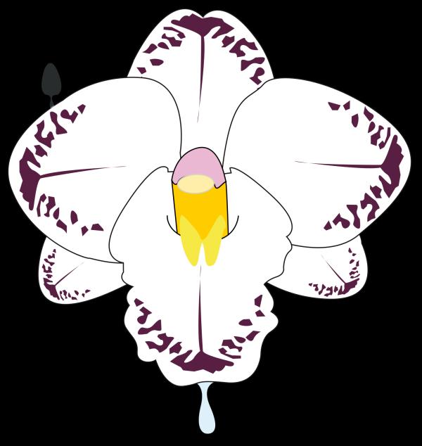 Fleur PNG Clip art