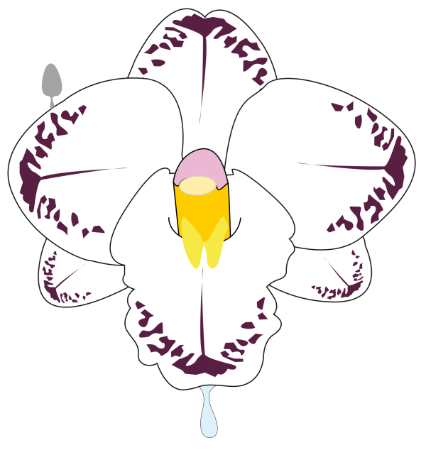 Fleur PNG icons