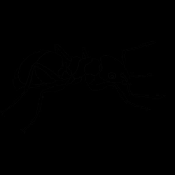Random Ant PNG Clip art