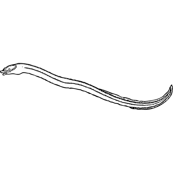 Eel Outline PNG Clip art