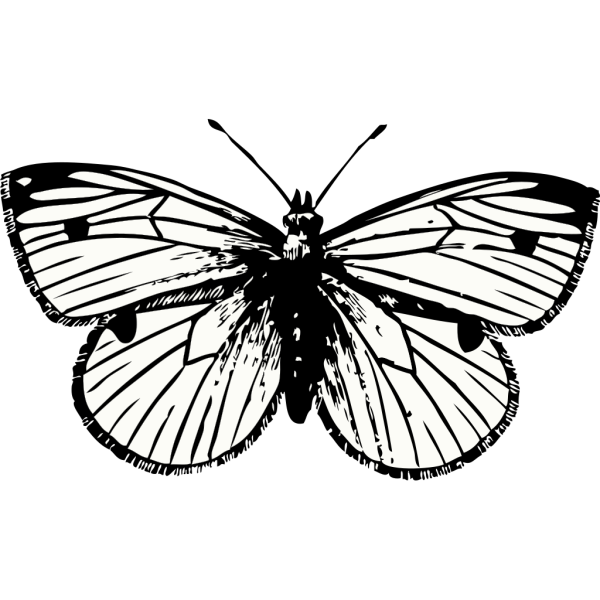 Cabbage Moth PNG Clip art