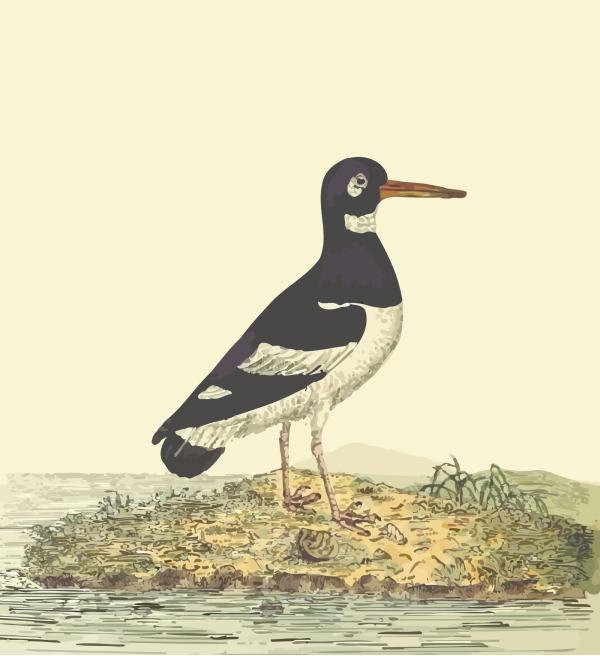 Seabird PNG Clip art