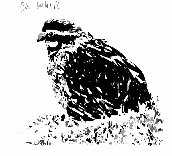 Bird Of Prey PNG Clip art