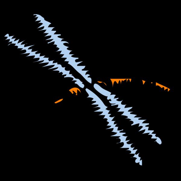Libellula PNG Clip art
